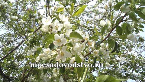 Весна и лето 2019 года«Моё садоводство»