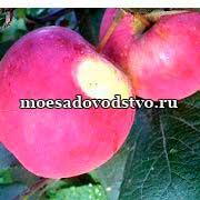 Плодовые деревья лучшие сорта