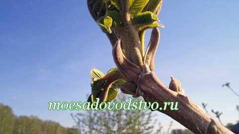 """Новости в нашем плодовом саду """"Моё садоводство"""""""