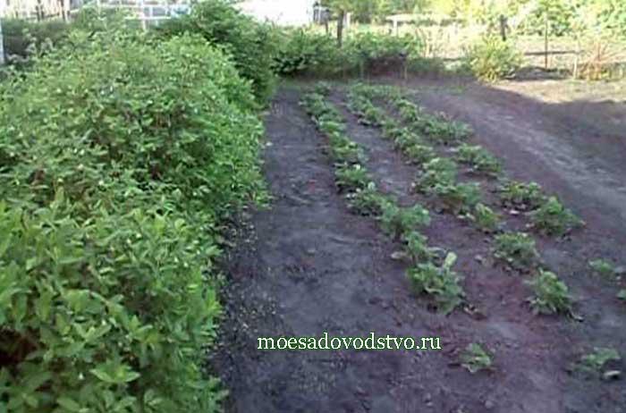 Моё садоводство